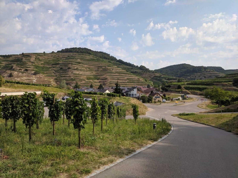 kaiserstuhl-weinberge