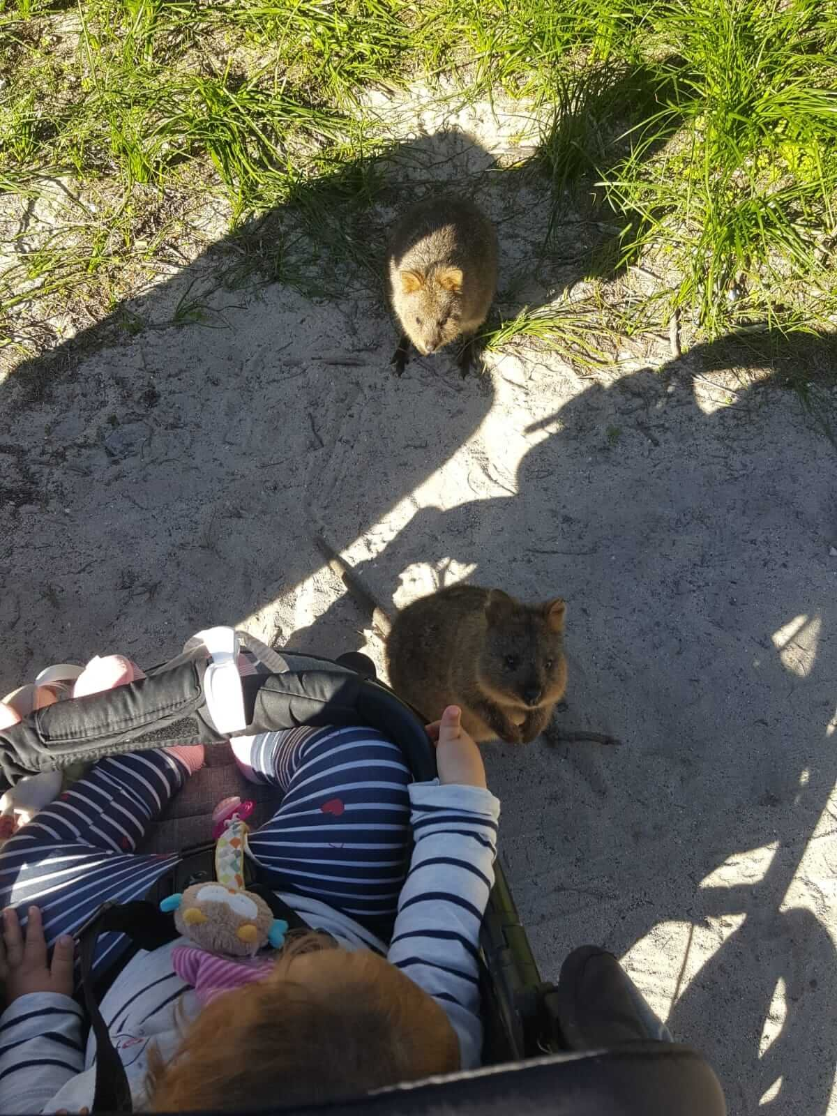 baby-marie-wombats5